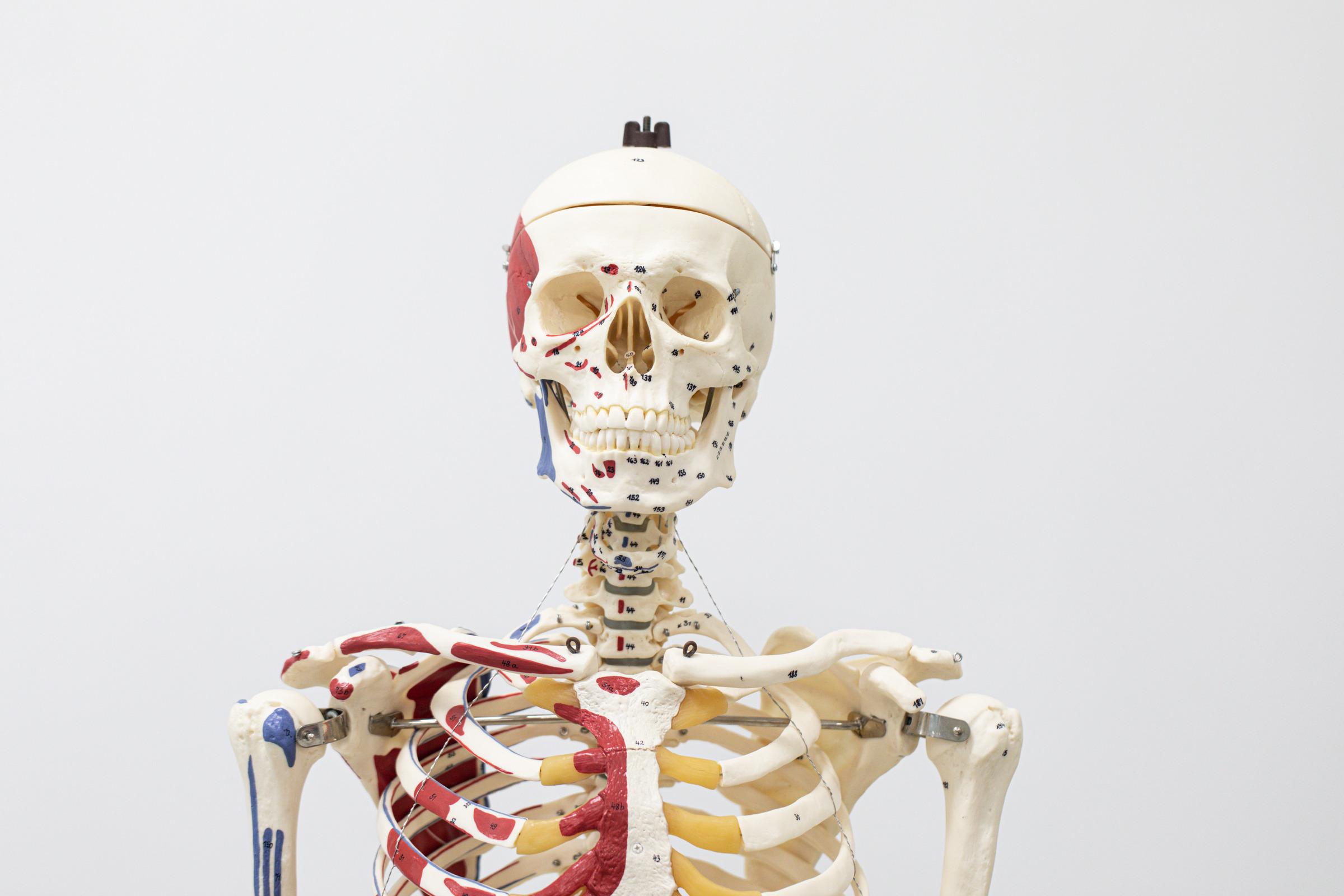 Anatomy & Physiology Lab I